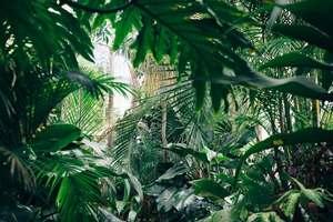 Diet Jungle - Photo by Chris Abney on Unsplash