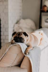Couch Potato- Photo by sarandy westfall on Unsplash