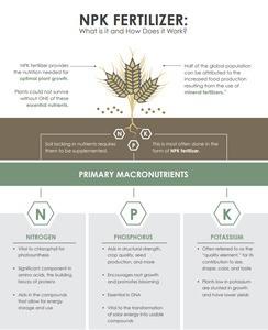 NPK Fertilizer- How does It Work?