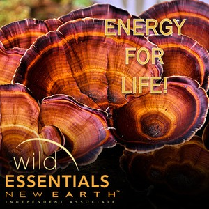 Wild Essentials Mushrooms