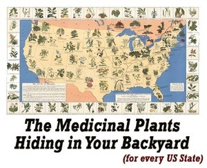 Lost Remedies - Medicinal Plants Hiding in Your Back Yard
